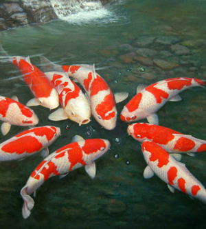 Pool and koi equipment suppliers effast for Koi ponds durban