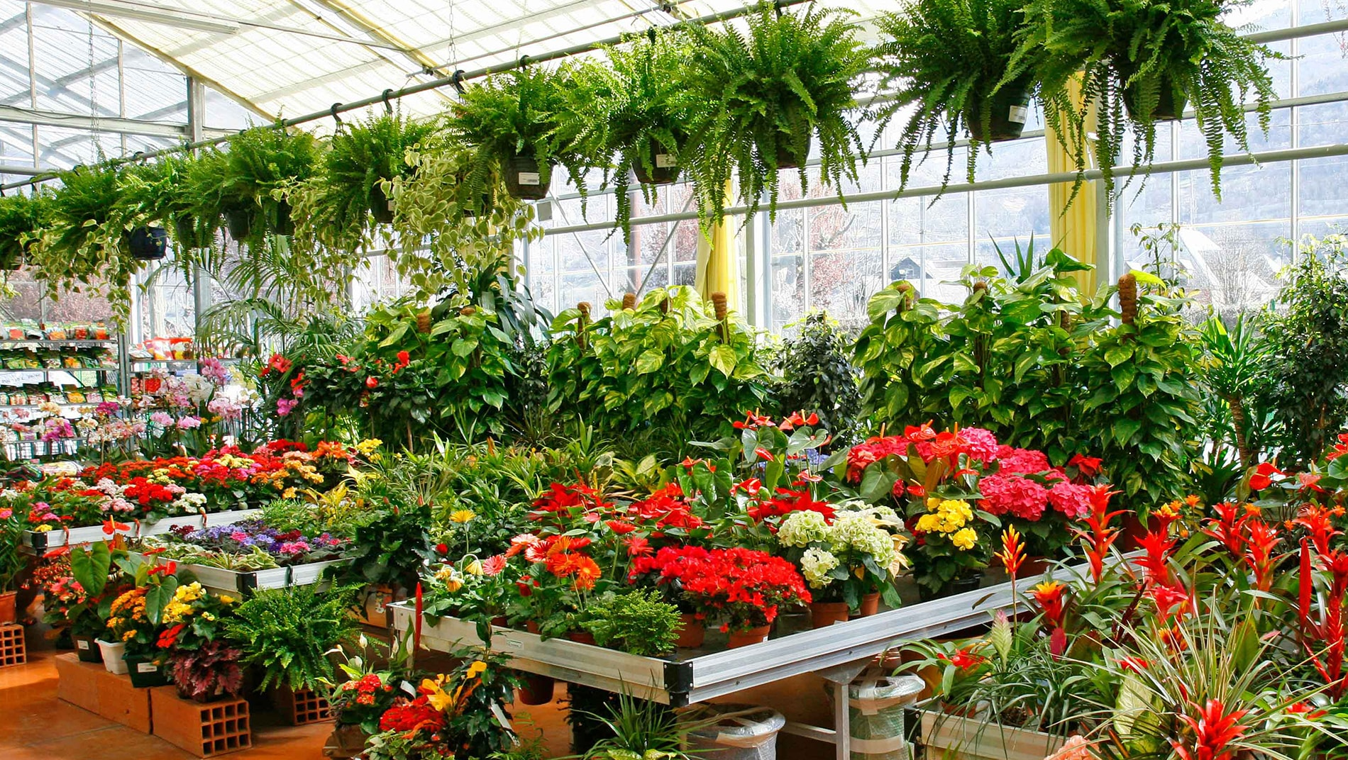 nursery-flowers-plants