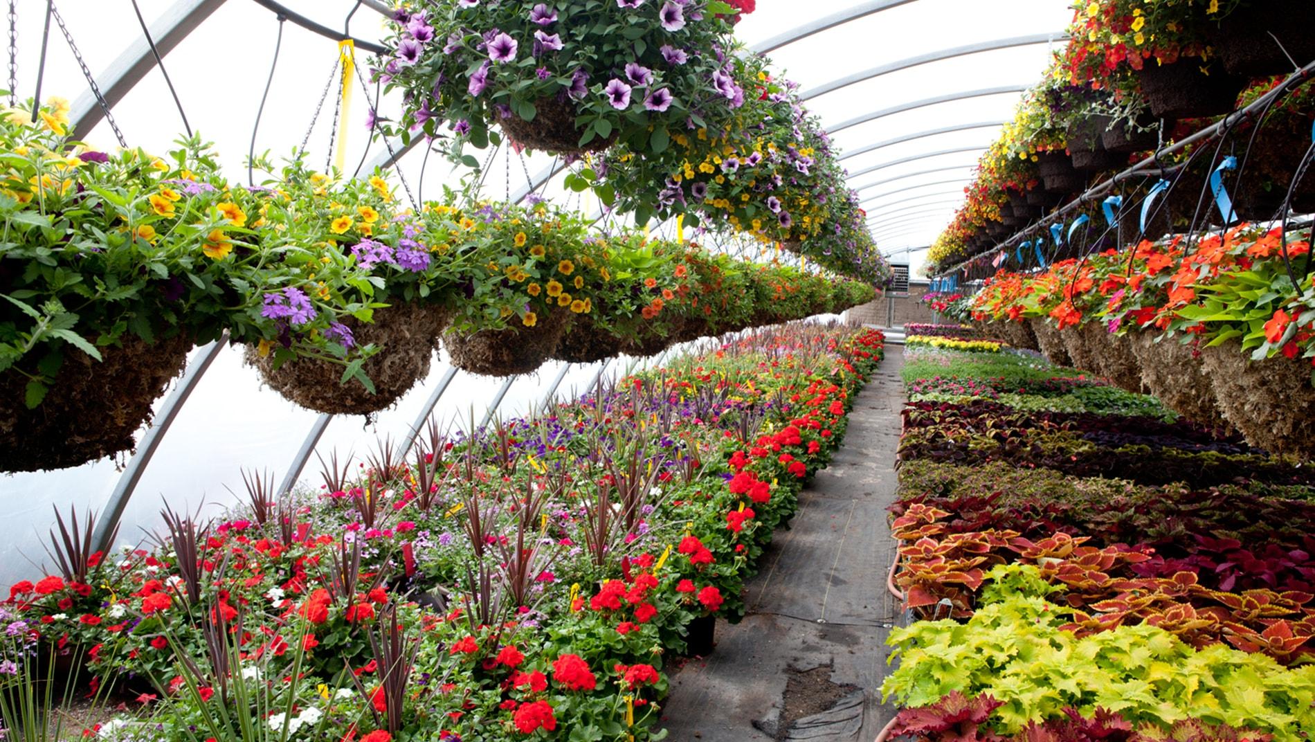 nursery-flowers
