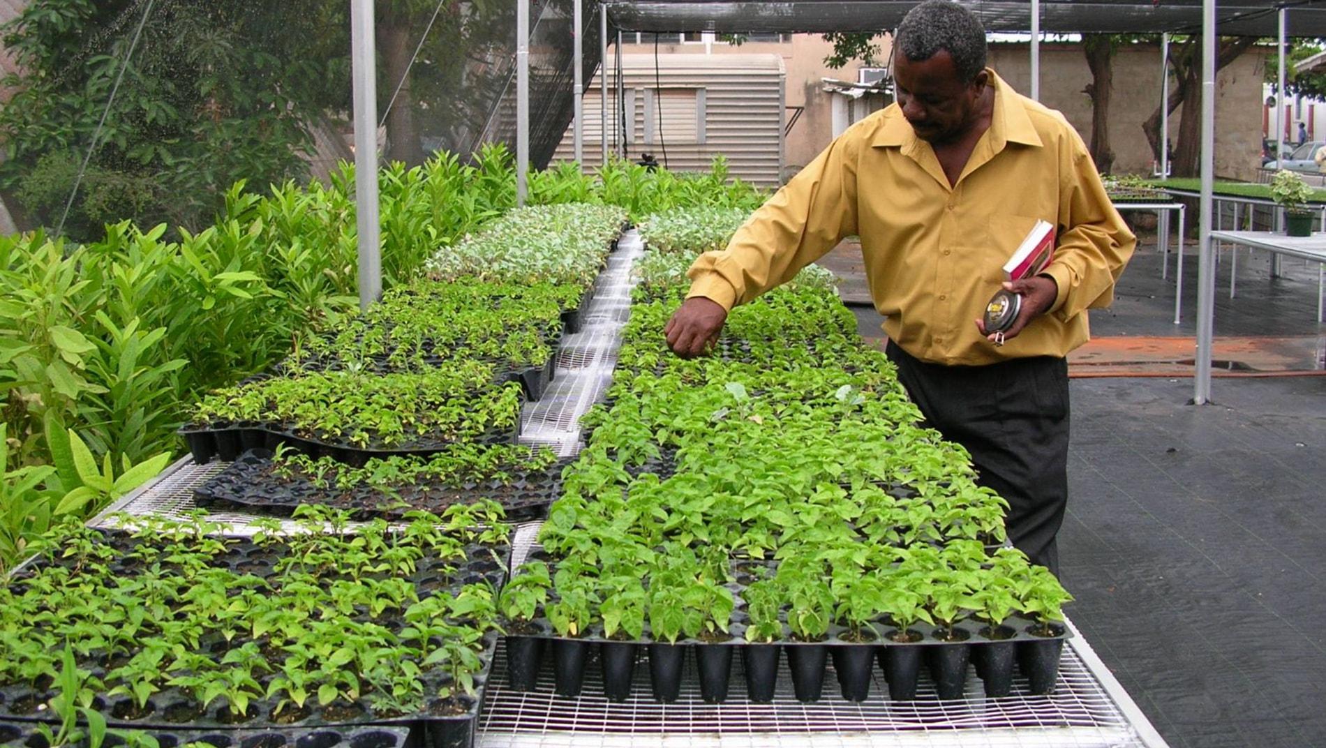 nursery-seedlings